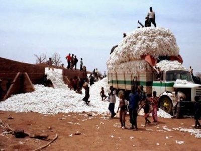 Le Burkina Faso est le 1er pays producteur de coton 2012-2013 en Afrique (Photo d'illustration)