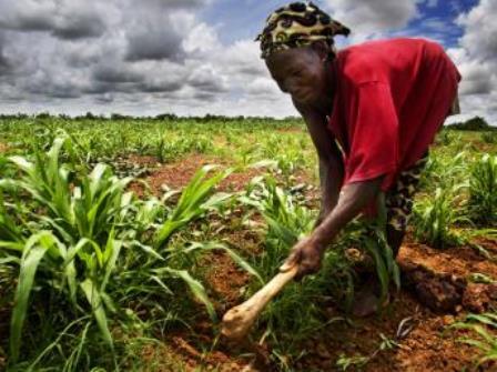 L'accaparement des terres au Mali (PH:DR)