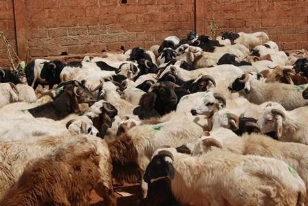 Un aperçu des moutons au flan de la gare de l'Est (Ph: B24)