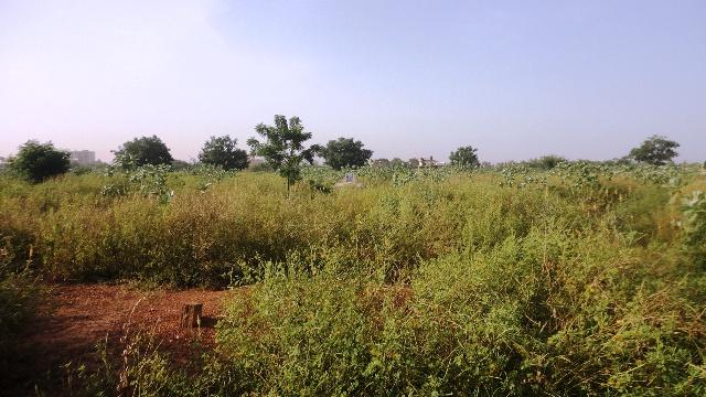 L'environnement général du cimetière de Dagnoen (Ph : Burkina 24)