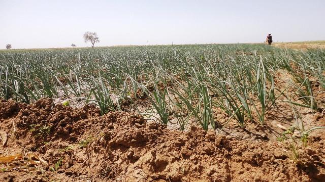 Le MCA a permis de réaliser le périmètre irrigué de Dî (© Burkina 24)