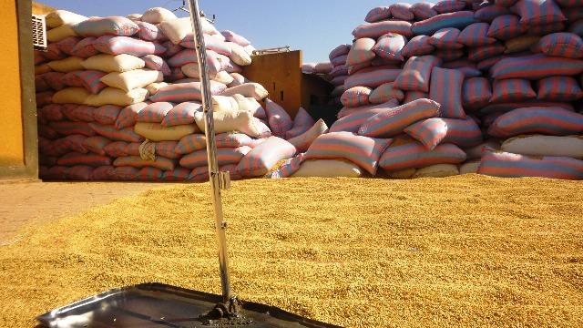 Les cantines scolaires pourraient recevoir le riz produit à Bagré (Ph : B24)