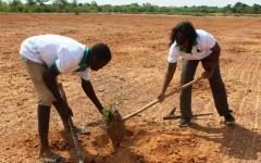 Forêt classée de Gonsé : Le coup de pelle de la BOA