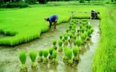 La Nouvelle Alliance sur la Sécurité Alimentaire et la Nutritionse fait entendre