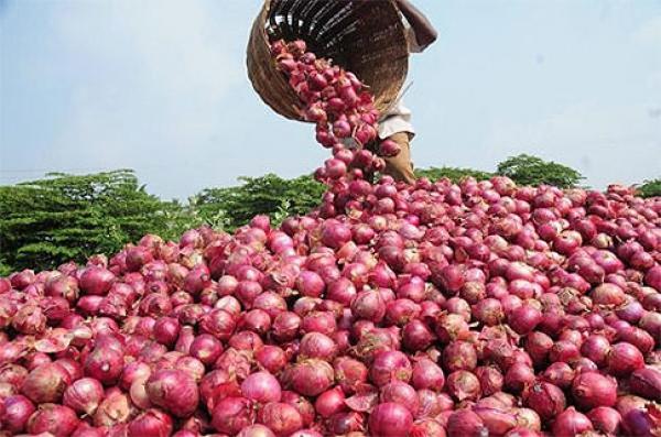 Onion farming business plan