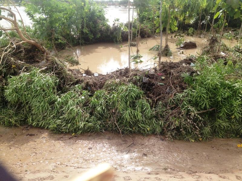 Des arbres plantés aux abords des maisons auraient jouer un rôle fondamental © Burkina24