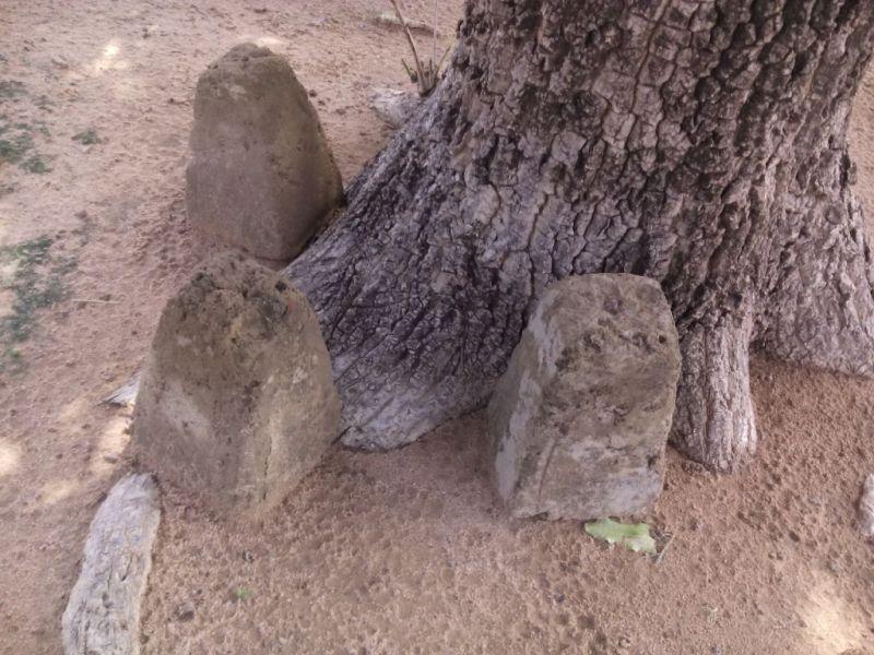 La quasi-totalité des bornes implantées dans le champ a été déterrée et regroupé sous des arbres comme ici.
