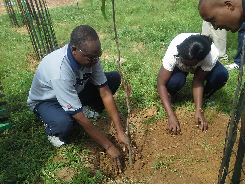 Boukary Ouédraogo dit Tintin doit se souvenir de cet arbre de la paix lorsqu'il commencera la campagne électorale
