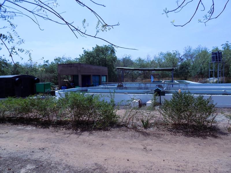 Aperçu de la Ferme Spiruline Nayalgué Annexe du Petit Séminaire de Koudougou.