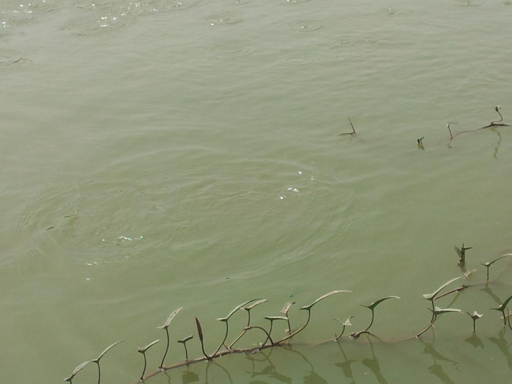 De cet étang, sortiront 2 tonnes de poissons dans quelques semaines.