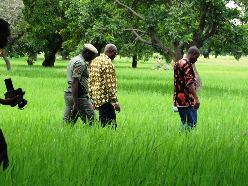Le ministre dans un champ de riz pluvial à Zambanéga dans la commune rurale de Tanghin Dassouri. © Burkina24